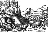 Вавельский дракон. Гравюра, 1550