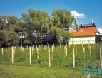 Зелёна Гура - виноградники в Винном парке