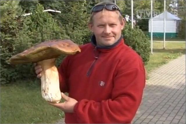 фото белого гриба польского